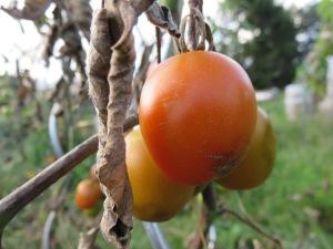 tomaten-bf