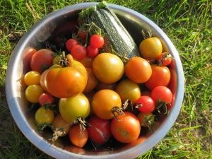Von Braunfäule befallene Tomatenfrüchte sind nicht essbar