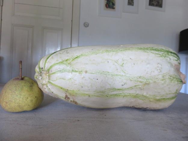 zucchini_ausgereift