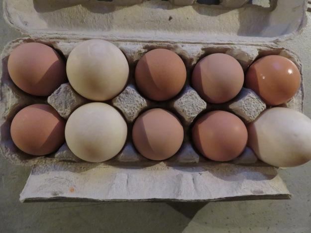 grosse-eier