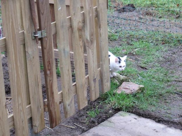 gartenkatzen