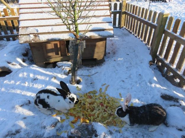 kaninchen-im-winter