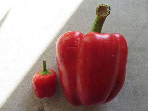 paprika-gk