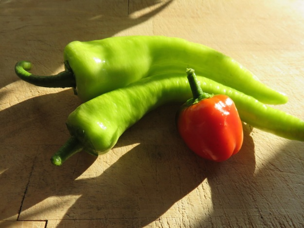 Kirschpaprika und Spitzpaprika Ende August