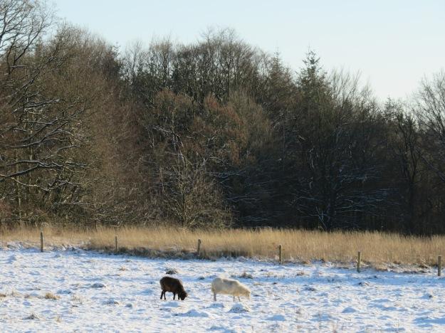 winter-steinzeit