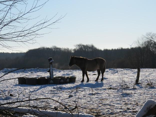 winter-steinzeit3