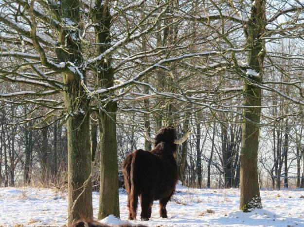 winter-steinzeit8