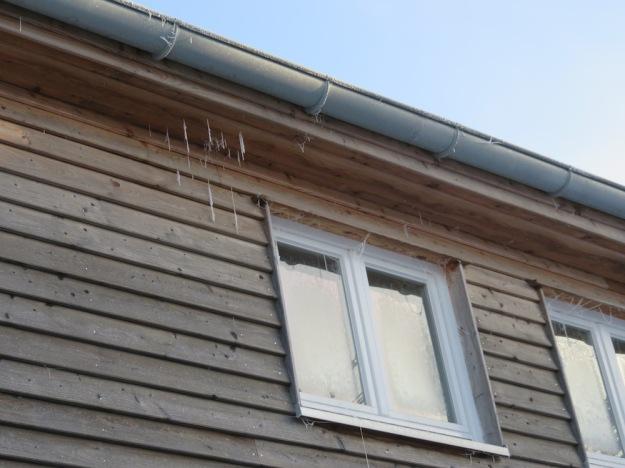 Unser Haus hängt offenbar voller Spinnweben, jetzt gut zu sehen durch Raureif