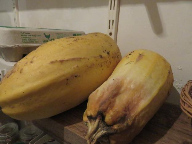 Wie lagerfähig sind ausgereifte Zucchini? Ein Versuch