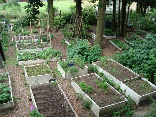 Garten Juli