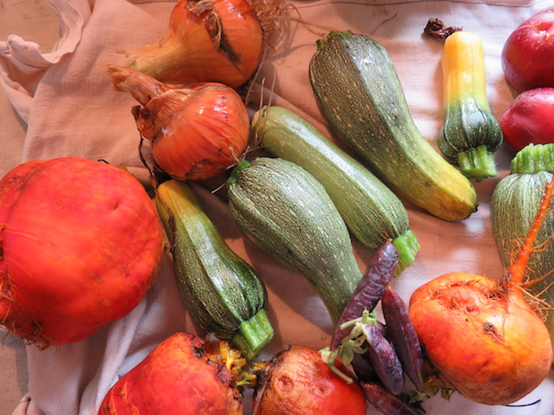 Zwiebeln, Bete, Zucchini und Eier gibt es nun satt & dreckig