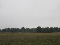 Heidelandschaft