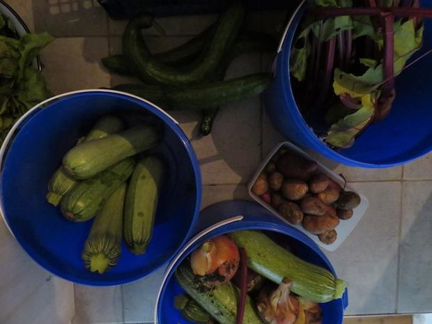 Jeden Tag Zucchini, Gurken, Bete, Kartoffeln ...