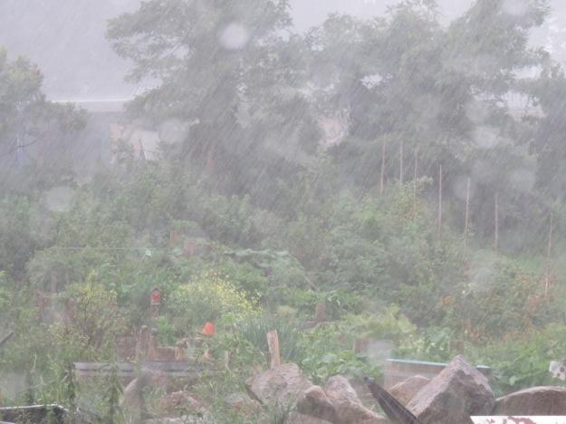 Dauerregen Sommer 2016