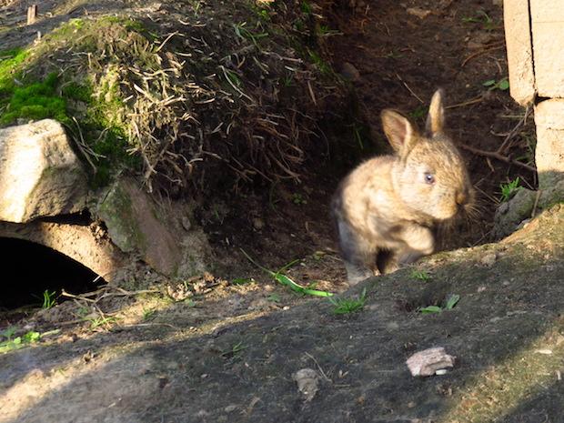 kaninchenbaby-macht-ausflug