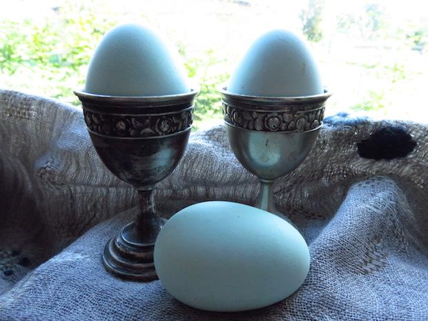 gruenleger-gruene-eier