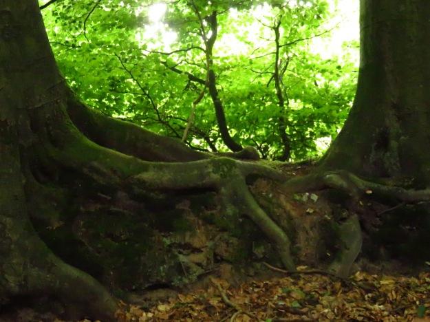 Bäume halten Händchen