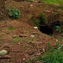 Fingerhut, Höhle, Knochen, Stein - wie im Märchenbuch oder? Da waren wir uns alle einig.