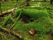 Kuschelig grüne Märchen-Mini-Landschaft