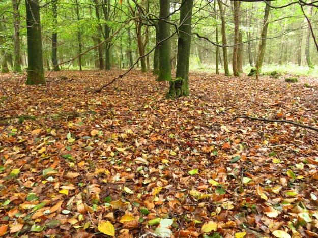 Ausnahmsweise ein Stück Laubwald