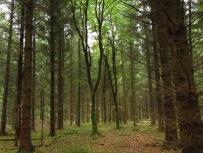 Ein frei schwebender Baum als Schlagfalle für Menschen?