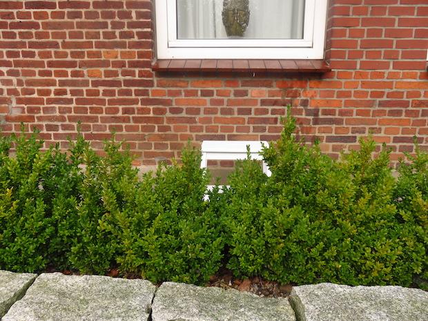 Fenster putzen am Altbau