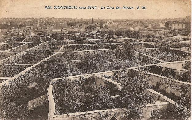 Le Clos de Peches: Pfirsich-Anbau vor Mauern, geschützte Lage und Wärmerückstrahlung