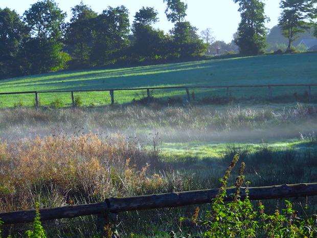 nebel-starter