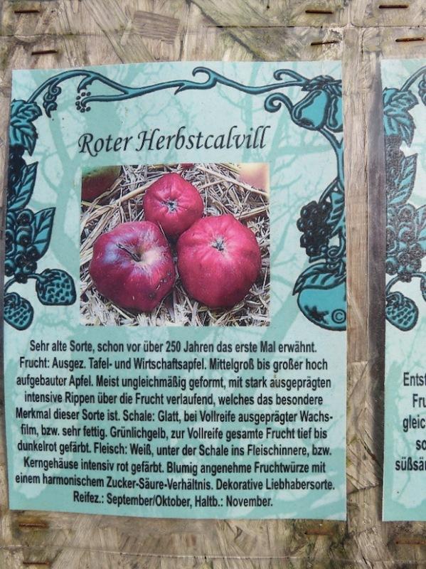 Diese Sortenbeschreibung und das Foto führten dazu, dass meine Tante den Apfel der am Golfplatz wächst und von dem sie schwärmte, als 'Roten Herbstcalvill' identifizieren konnte.