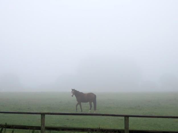Nebel im Herbst mit Pferd