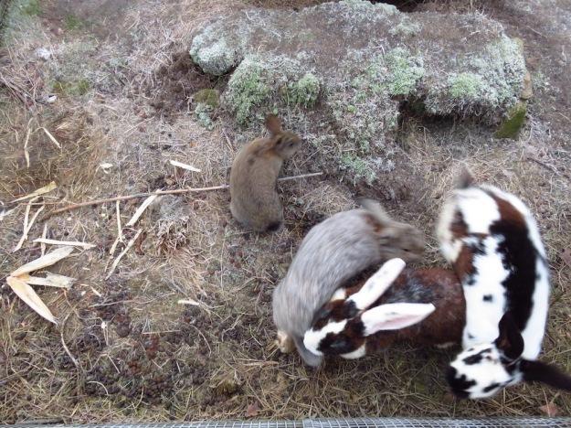Leben im Kaninchengehege - immerhin.