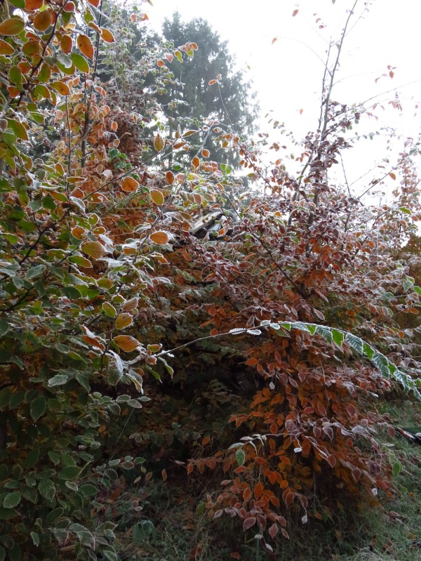 Hält der Baum die Blätter lang, macht ein später Winter bang.