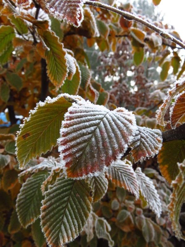 Hängt's Laub in den November rein, wird der Winter lange sein.