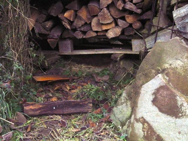 Unterschlupf unter dem Holzstoß, hier haben schon Enten gebrütet und auch Kater Heinzi stellt sich hier unter