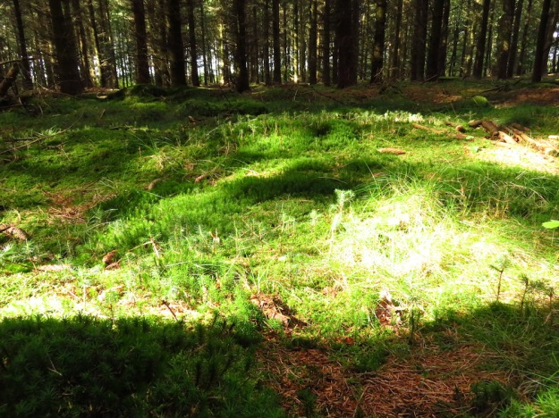 Der Pilzwald