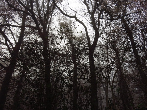 Nebelwald im November