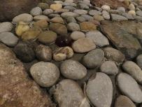 Karfunkel im Flußbett