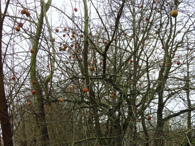 Apfelbaum mit roten Kugeln im Winter
