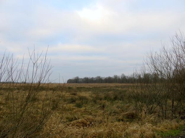 Feuchte Wiesen mit Wollgras und Rohrkolben
