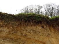 Die dünne, kostbare & humusreiche Krume