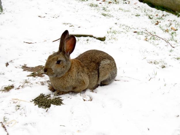 kaninchen-im-schnee