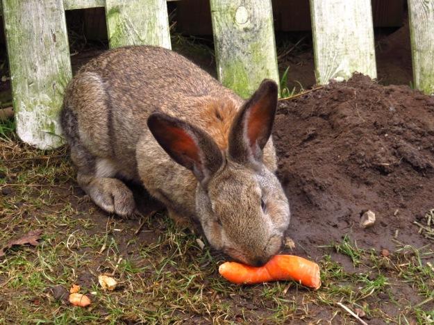 kaninchenfruehstueck