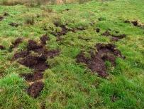 Von Wildschweinen umgebrochene Wiese
