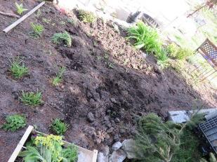 Neu bepflanztes 'Hochbeet'