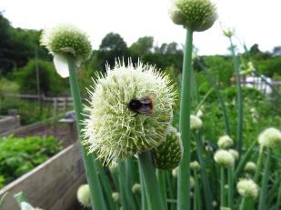 Insektenmagnet Winterhecke-Blüte