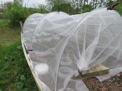 Im fünften Anbaujahr endlich ein Netz überm Kohl ...