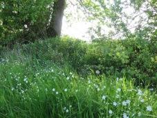 Am Knick zwischen den Sternchenblumen wohnen vermutlich Elfen.
