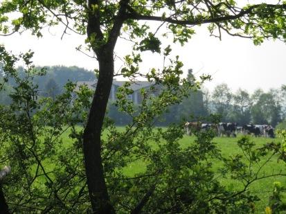 Schleswig-Holsteinische Landschaft mit typischem Bild.