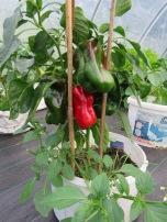 Noch mehr Paprika
