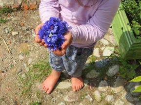 kornblumen-kind